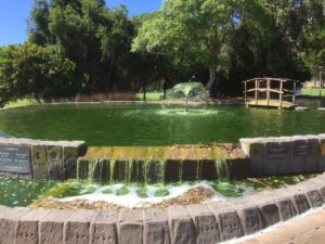 pond water purification